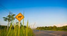 Driving Checklist