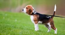 Dog Walking Checklist