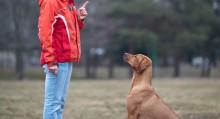 Dog Training Checklist