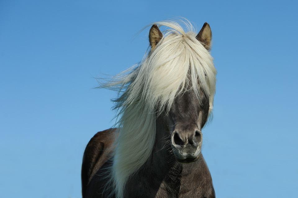Checklist ponykamp