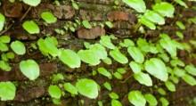Green Garden Checklist