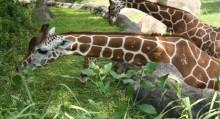 Zoo Trip Checklist